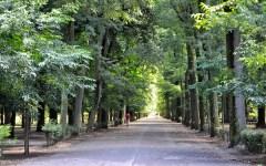 Firenze: alle Cascine saranno piantati 440 nuovi alberi