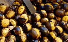 Toscana, castagne e marroni: l'annata 2014 è poverissima. L'allarme di Coldiretti