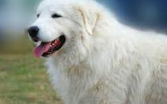 Maltempo, Firenze: salvato dai vigili del fuoco e dai veterinari dell'Asl il cane Noè. Era fuggito spaventato dai tuoni