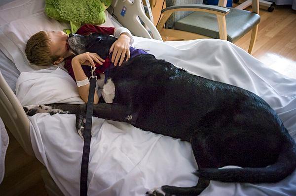 I malati in ospedale si sentiranno meno soli con il proprio animale domestico