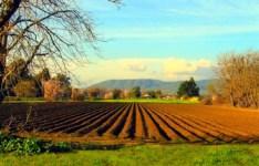 L'odissea dell'Imu sui terreni agricoli continua