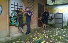 Firenze, centro storico: raffica di arresti per droga dopo le segnalazioni dei cittadini