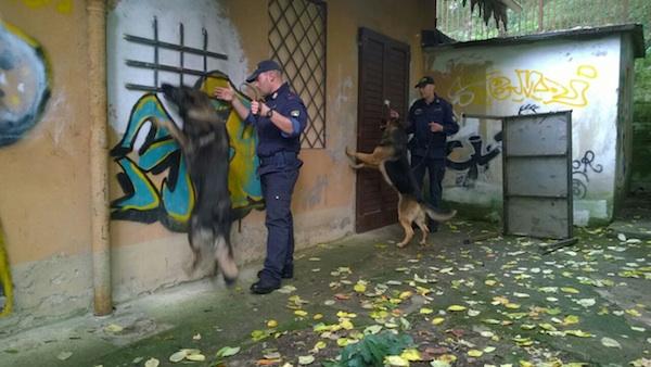 I cani poliziotto antidroga durante un controllo