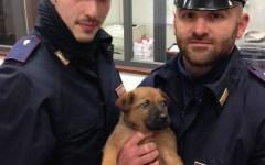 Firenze, prende a calci un cucciolo alla stazione. Il cane, salvato dalla Polfer, ora attende di essere adottato