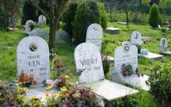 Firenze avrà un cimitero degli animali: via libera dal Consiglio comunale