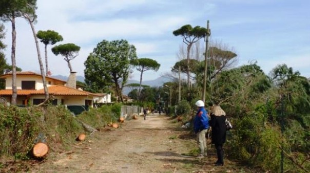 Versilia, alberi abbattuti dopo l'uragano del 5 marzo
