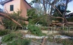 Forte dei Marmi: sradicati dal vento i mitici pini . Il sindaco Buratti: «La città ha cambiato volto...»