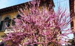 Meteo: sole e caldo in Toscana. Dal 12 aprile arriva la primavera