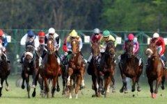 Ippica a Firenze: sabato 25 aprile torna la corsa dell'Arno, la più antica d'Italia
