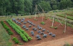 Coltivare un orto può aiutare le persone disabili