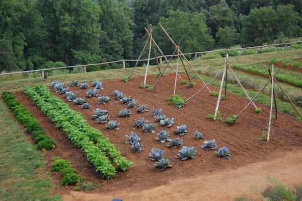 La coltivazione di orti aiuta le persone disabili