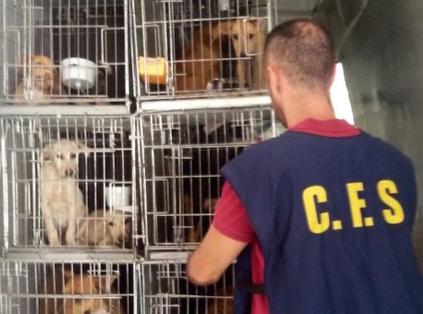 Il furgone con i cani a bordo bloccato dalla Forestale