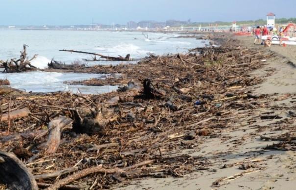 Spiagge invase dai tronchi a Marina di Grosseto e Principina