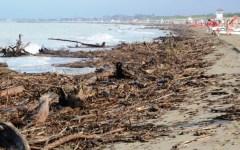 Grosseto, Marina e Principina: spiaggia invasa dai tronchi degli alberi