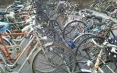 Greve in Chianti, immigrazione: l'assessore Maria Grazia Esposito invita i cittadini a regalare le biciclette usate ai migranti