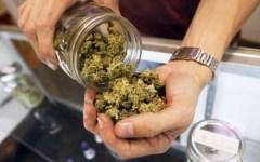 Firenze, cure con la cannabis: pazienti triplicati in un anno
