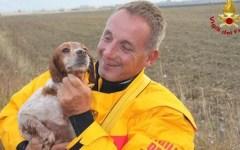 Pisa, cane da caccia cade in un pozzo a Cascina. Salvato in extremis dai Vigili del Fuoco