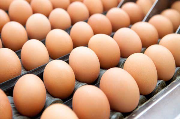 Coldiretti Toscana - produzione e consumo uova 2014-2015
