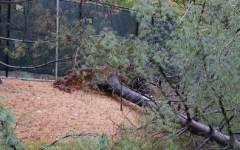Arezzo: 66enne di Castel San Niccolò muore travolto dall'albero che stava tagliando