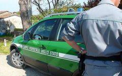 Monte San Savino: taglio abusivo di alberi scoperto dalla Forestale. Denunciati i responsabili