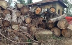Sansepolcro, maltempo: strada invasa dai tronchi d'albero, località e abitazioni isolate