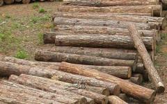 Chianni: in quattro rubano 300 quintali di legna, arrestati dai carabinieri