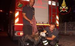 Pisa: cane cade in un fossato, salvato dai vigili del fuoco