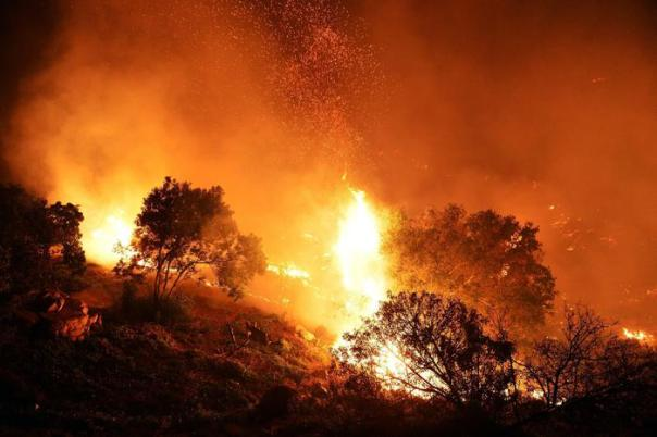 Incendi: foto generica bosco in fiamme