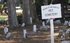Firenze: approvato dalla Giunta il regolamento per i Cimiteri degli animali di affezione