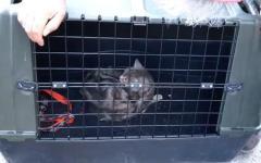 Terremoto: ritrovata viva la gatta Olivia a due mesi dalle scosse. L'intervento dei Vigili del fuoco