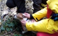 Pisa: cagnolino caduto in Arno salvato dai Vigili del fuoco