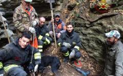 Pomarance: cane prigioniero nella tana di un'istrice liberato dai vigili del fuoco