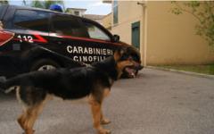 Firenze: controlli dei carabinieri nella zona nord della città: Arrestato un tunisino per furto aggravato, recuperato mezzo chilo di hashish