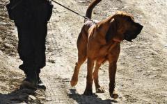 Firenze: scomparso un 16enne, lo cercano i carabinieri