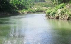 Certaldo: liquido sversato da cisterna nel fiume Elsa avvelena pesci