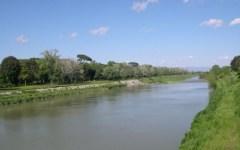 Montelupo (Firenze): morìa di pesci in Arno. Analisi all'istituto zooprofilattico di Scandicci