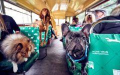 Firenze: Cani, gatti conigli (animali d'affezione) sugli autobus in Toscana. Sì unanime del Consiglio regionale
