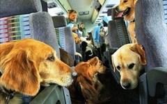 Toscana: cani e gatti potranno salire sugli autobus. Approvata la legge