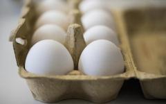 Natale: sos panettone e pandoro. Mancano 100 milioni di uova al mese per confezionarli