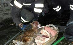 Arezzo: cane salvato dai vigili del fuoco. Era finito in un tubo di 4 metri a Chiusi della Verna