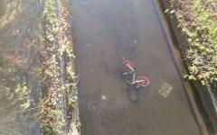 Firenze, bikesharing: Aduc denuncia, bici parcheggiate ovunque senza regole. Anche il comune ha le sue colpe (foto)