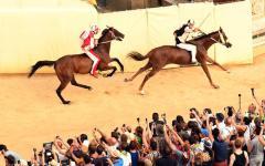 Siena, Palio: assegnati cavalli alle contrade, stasera prima prova
