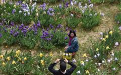Firenze: riapre oggi il Giardino dell'iris al Piazzale Michelangelo