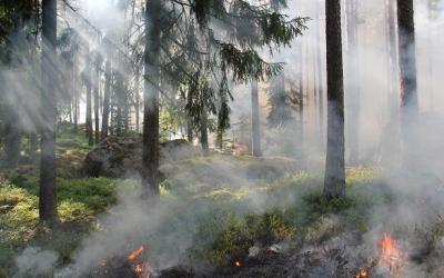 Fire Investigation – Wildfire Investigation