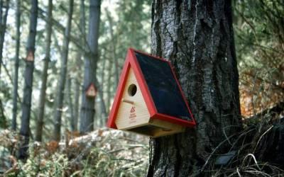 Birdhouse alarm created to prevent wildfires