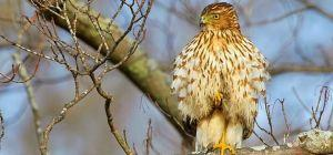 The World's Most Polluted Bird Is Now Completely Immune to Fire!