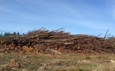 BC regulations allow logging debris to be left on the ground for years