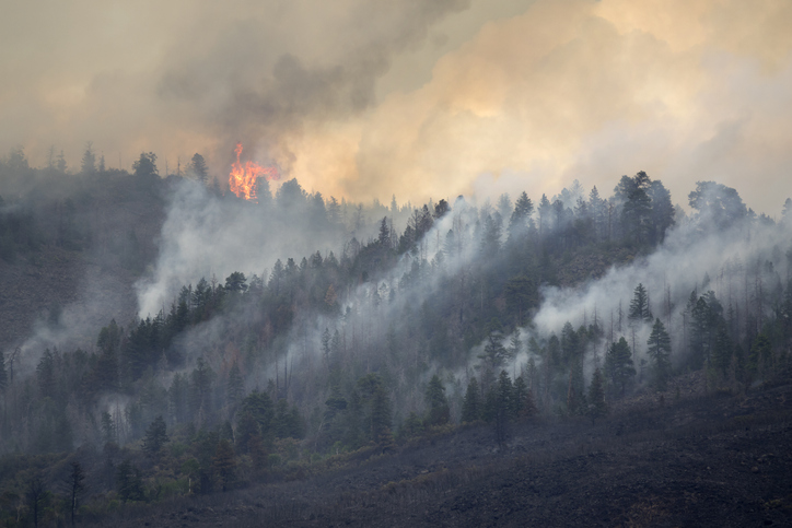 Living with Wildfire Risk