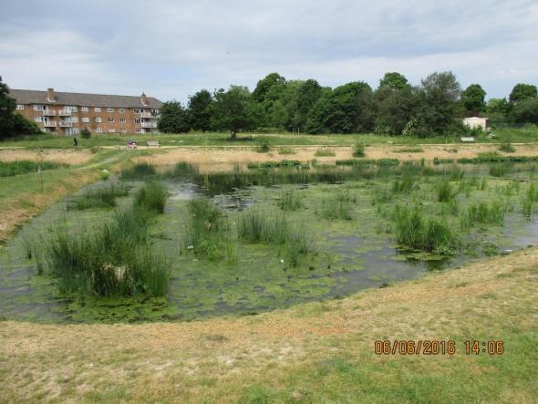 Firs Farm wetland area