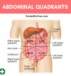 the four abdominal quadrants [ 1024 x 1024 Pixel ]